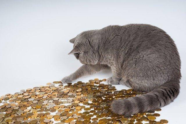 kočka s mincemi