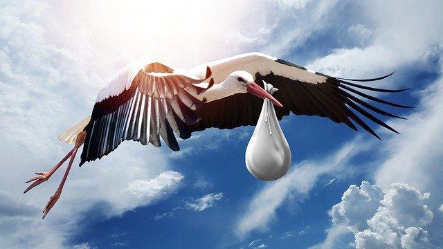 letící čáp nese v uzlíku mimino